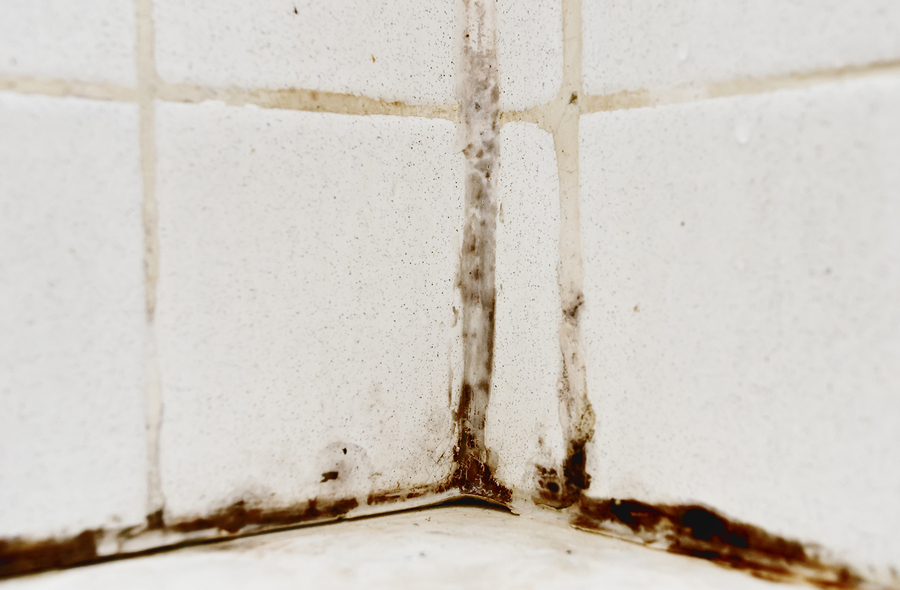 5 Ways To Spot Mold In Your House Or Apartment